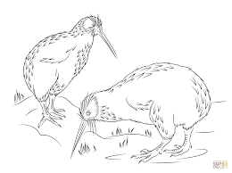 Small Picture Little Spotted Kiwi coloring page Free Printable Coloring Pages