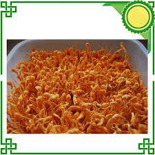 North Cordyceps Sinensis Jin Chong Cao Chinese Herbal 300G|cao msds|cao  maochinese - AliExpress