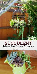 Small Picture The 25 best Succulent garden ideas ideas on Pinterest Succulent