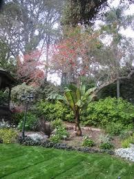 san go botanic garden orange flowers throughout tree
