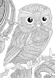 Printable Owl Coloring Pages For Adults Color Bros