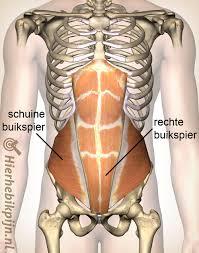 Spierpijn in buik zwanger