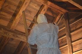 La taille de l'individu résulte de la qualité nutritionnelle du bois. Insectes Xylophages Eradication