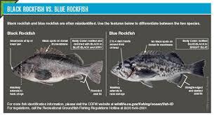 In Season Groundfish Changes California Saltwater Fishing