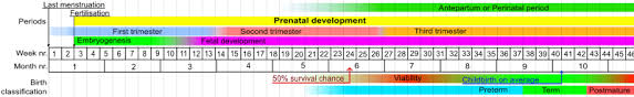 Baby Survival Rate Chart Fetal Viability Wikipedia