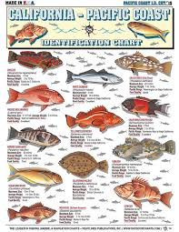 Saltwater Fishing Charts And Saltwater Fish Identification