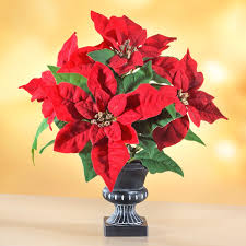 Weihnachtsstern Mit Vase Antik