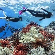 75 Best Instagram Images In 2019 Instagram Snorkeling