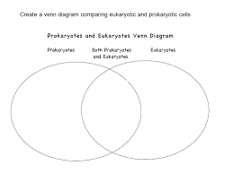 A Venn Diagram Of Prokaryotic And Eukaryotic Cells Venn Diagram Prokaryotic And Eukaryotic Under Fontanacountryinn Com