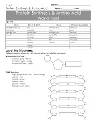 Protein Synthesis Amino Acid Worksheet