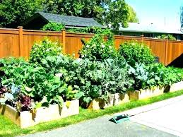 small vegetable gardens how to grow a garden vegetables in containers backyard plans layout