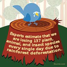 deforestation essay gravy anecdote deforestation essay