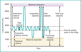 Normal Lung Volumes And Capacities Chart Inspiratory Reserve Volume An Overview Sciencedirect Topics