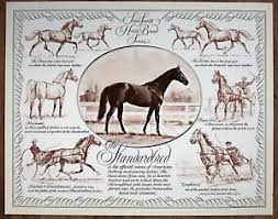Details About Horse Breed Chart Standardbred In Portrait And Action By Sam Savitt