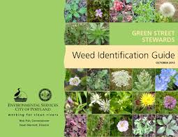 Weed Identification Guide Portland Oregon Pages 1 34
