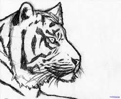 easy tiger pencil drawing. Fine Pencil Easy Tiger Drawings In Pencil Throughout Easy Tiger Pencil Drawing R