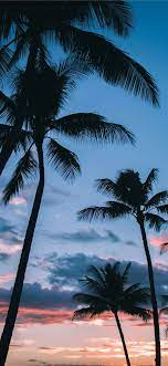 Iphone 11 Wallpaper Palm Trees
