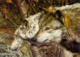 carl brenders companions wolves
