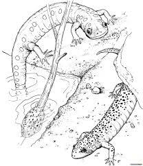 эскизы тату саламандра клуб татуировки фото тату значения эскизы