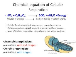 the overall balanced chemical equation for aerobic cellular