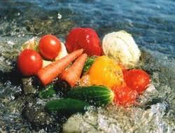 Чистые продукты питания и здоровье человека Экологические проблемы чистые продукты питания и здоровье человека