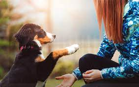 Animal testing has made many medical treatments possible, including cancer and hiv medications, insulin, antibiotics, vaccines and many more. Pet Insurance Vs Pet Wellness Trupanion