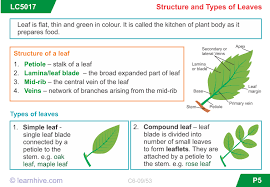 Plant Structures And Functions Worksheet Worksheets for all besides  as well 1 1 unit plan likewise Cell Parts Diagrams   Worksheets  Plant cell and Diagram as well plant structures   functions   Third Grade Science and Social additionally  as well Unit 7 Chapter 23 Plant Structure and Function   ppt download furthermore Cell Parts And Functions Worksheet Free Worksheets Library furthermore Photosynthesis and leaves  structure of leaves by KatieBall in addition  moreover . on plant structure and function worksheet