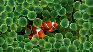 High Definition Pictures Fish Wallpapers Best Wallpapers