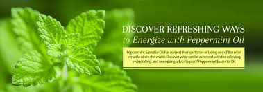 Peppermint <b>Oil</b> - Recipes, Uses & Benefits of Peppermint Essential <b>Oil</b>