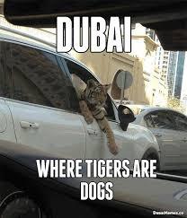 Dubai, Where Tigers Are Dogs Dubai Meme   Dubai: Dubai Memes ... via Relatably.com