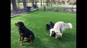 fake grass indoor. 8\u0027 X 15\u0027 Synthetic Turf Artificial Lawn Fake Grass Indoor Outdoor Landscape Pet Dog Area