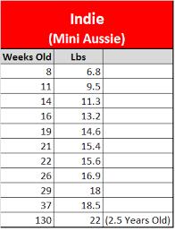 Mini Aussie Growth Chart Goldenacresdogs Com