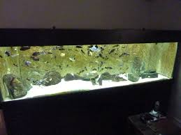 Fish Tank How To Catch Fish From A Large Fish Tank Aquarium Tropical Fish Site