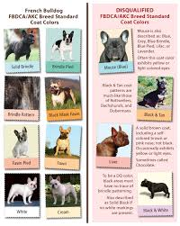 American Bulldog Height Chart Perspicuous French Bulldog Dna Chart French Club Chart