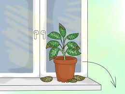 Lighting for houseplants Bathroom Wikihow How To Provide The Right Light Requirements For Indoor Plants