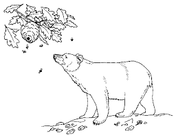 Small Picture Black Bear coloring page Free Printable Coloring Pages