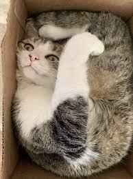 Фото: 12 - Смешные котики, которые предпочитают странные места для отдыха  (фото) - Главком