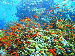 essay on the ldquo coral reefs rdquo in coral reef