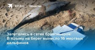 Запутались в сетях браконьеров: В Крыму на берег вынесло 16 ...