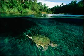 the staying power of snapping turtles