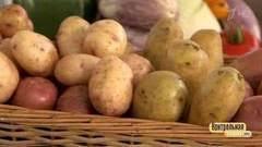 Картофельное пюре быстрого приготовления Контрольная закупка  Контрольная закупка