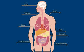Human Body Parts Chart In English How Much Prices Of Our Human Body Parts Newscutzy