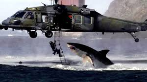 great white shark jumping at a helicopter during training. Exellent Great Intended Great White Shark Jumping At A Helicopter During Training YouTube