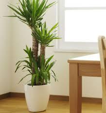 office indoor plants. indoor plants tall office