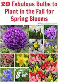 20 fabulous bulbs to plant in the fall for spring blooms when people think of bulb flower types f74