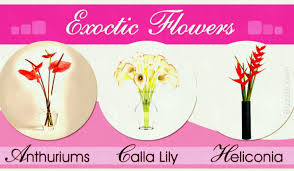 list of diffe types exotic flowers with exquisite visuals