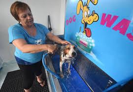 making fido s bath fun and profitable in wilmington news wilmington star news wilmington nc