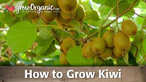 How To Grow Fruit Trees In Containers Complete Guide  YouTubeHow Often Should I Water My Fruit Trees