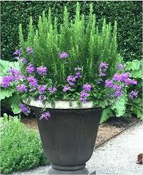 patio planters ideas patio container garden ideas inspirational best container gardening ideas images on winter patio