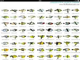 Warbler Id Chart Warblers Undersides Wildanimals Bird Tree Birds Bird
